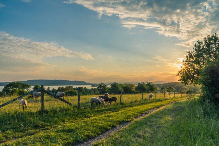¿Cómo generar oportunidades en el medio rural?