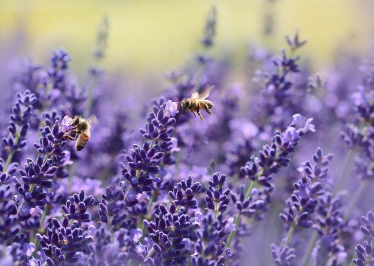 Cómo las abejas nos pueden ayudar a encontrar empleo
