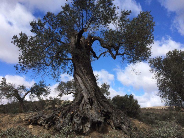 """Apadrinaunolivo: """"La vuelta a lo auténtico, a lo natural y a lo tradicional es una realidad"""""""