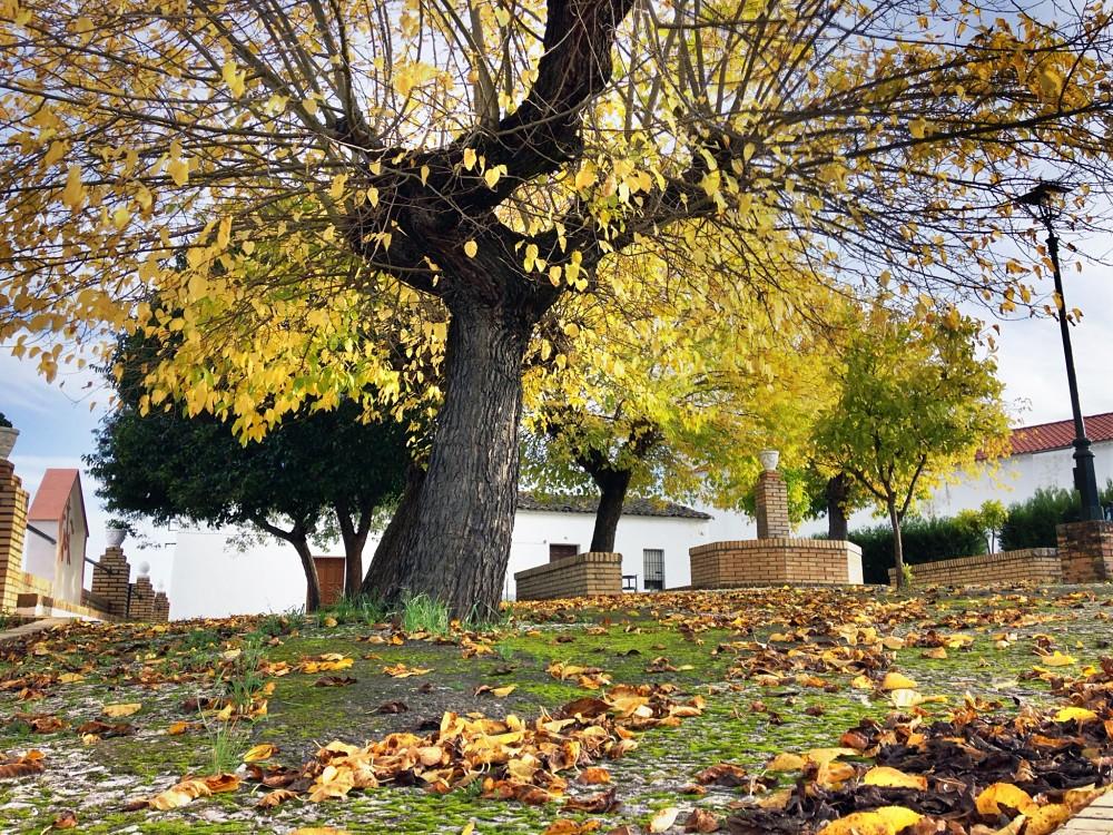 Medio_Rural
