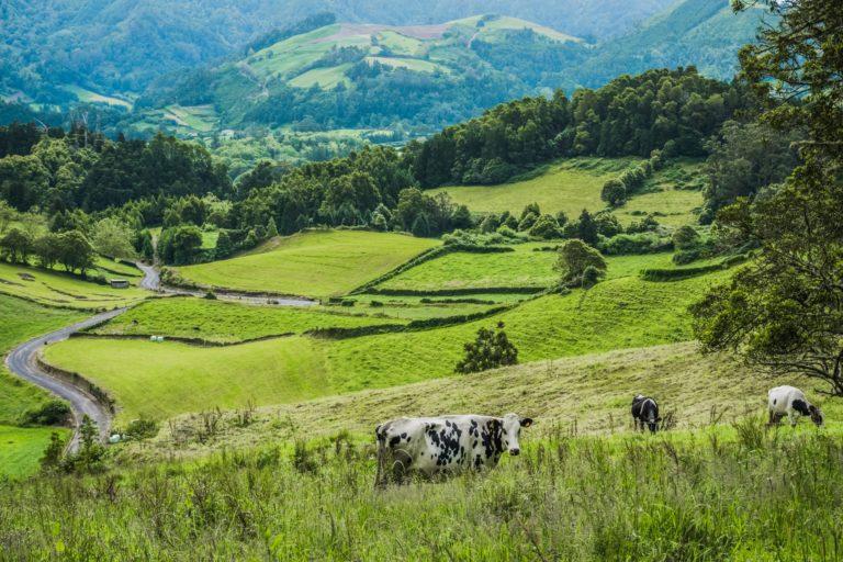 Lucha contra la despoblación rural