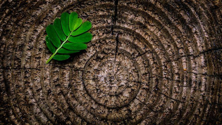 Consumo, sensibilización medioambiental y mundo rural