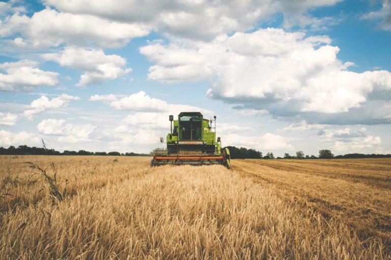 Ideas sencillas de negocio para vivir en el mundo rural