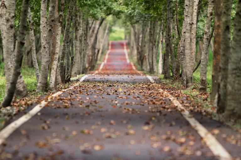 Carreteras rurales: Una inversión indispensable