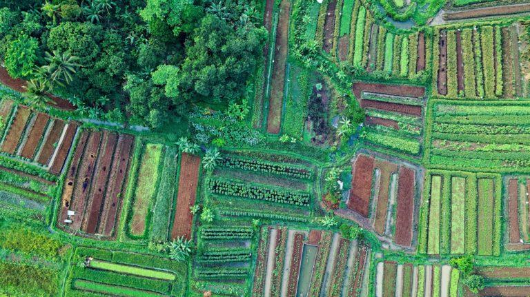 El cooperativismo ecológico nos ayuda a la fijación de población rural