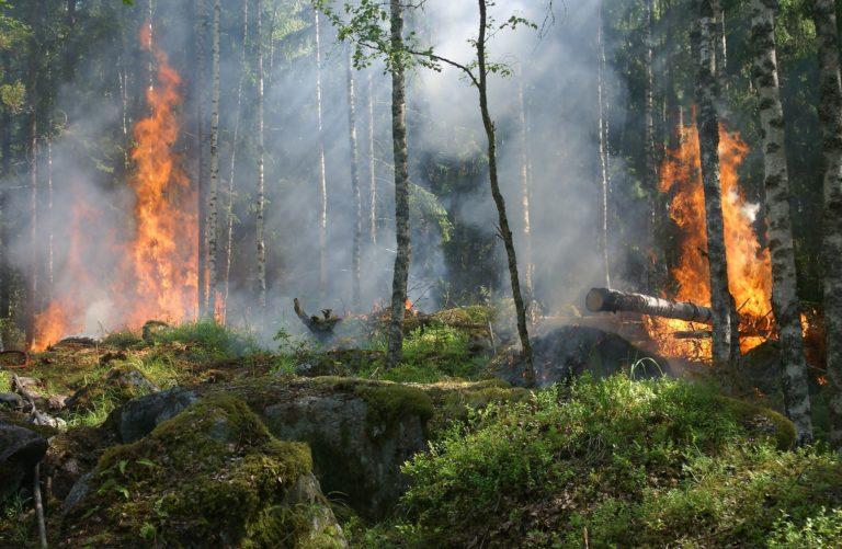 Incendios: la gran amenaza del mundo rural