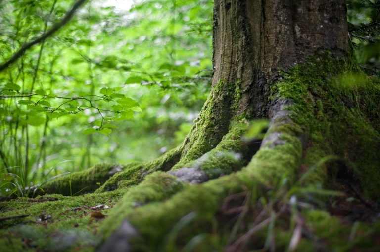 Babel Nature, un proyecto de Ecoturismo