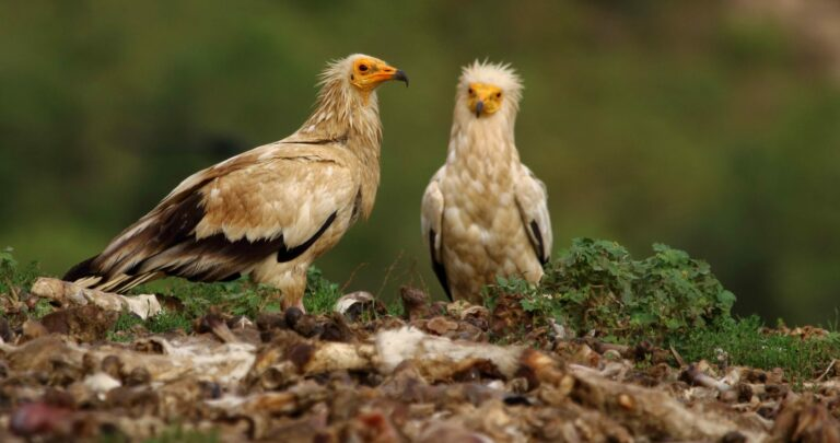 Cómo puede un proyecto de conservación natural contribuir a la reactivación rural