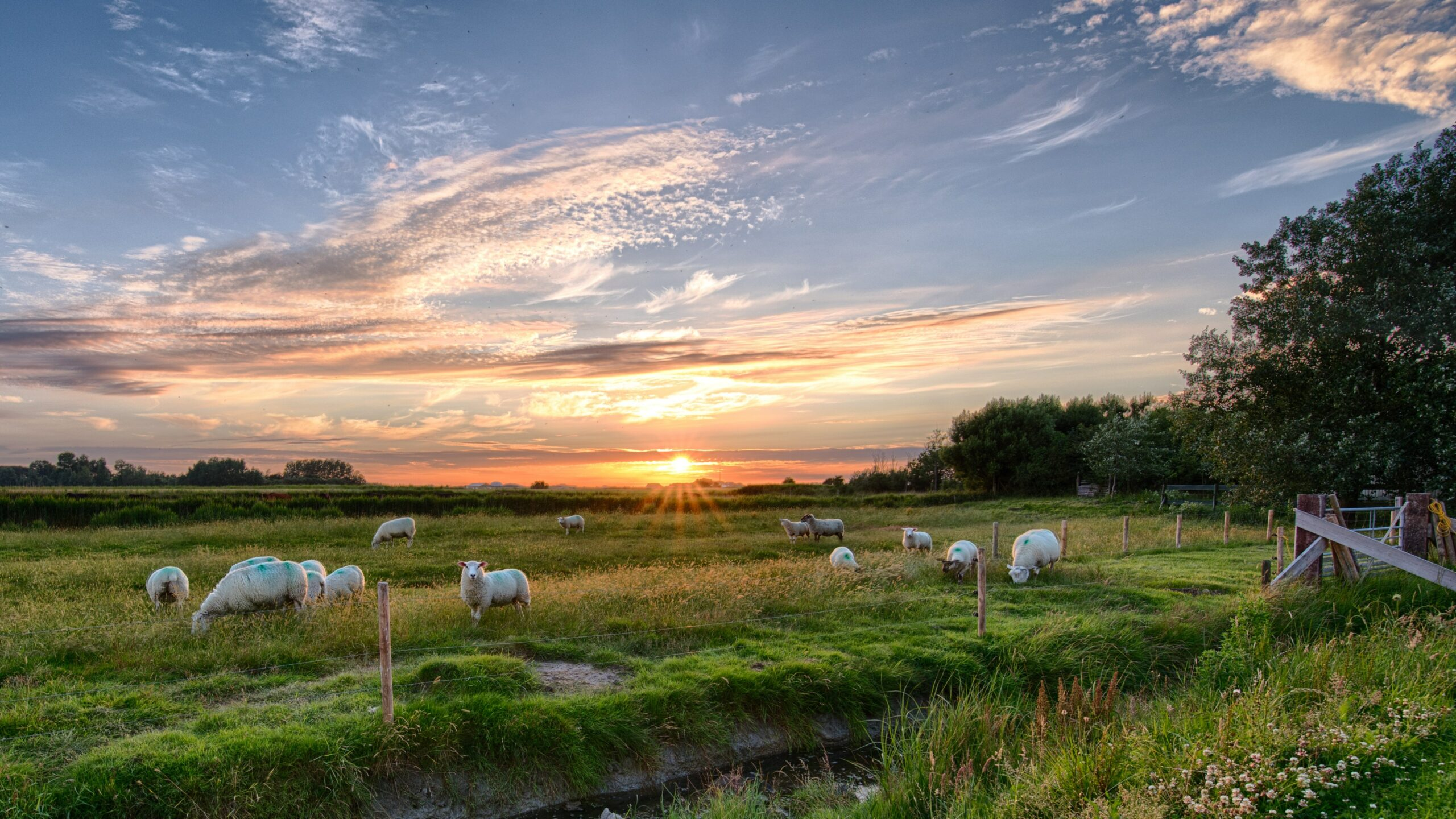 Ecosistemas rurales: mitigación de las consecuencias del cambio climático