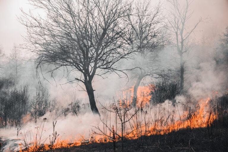 Gestión de los suelos en el medio rural para evitar grandes incendios